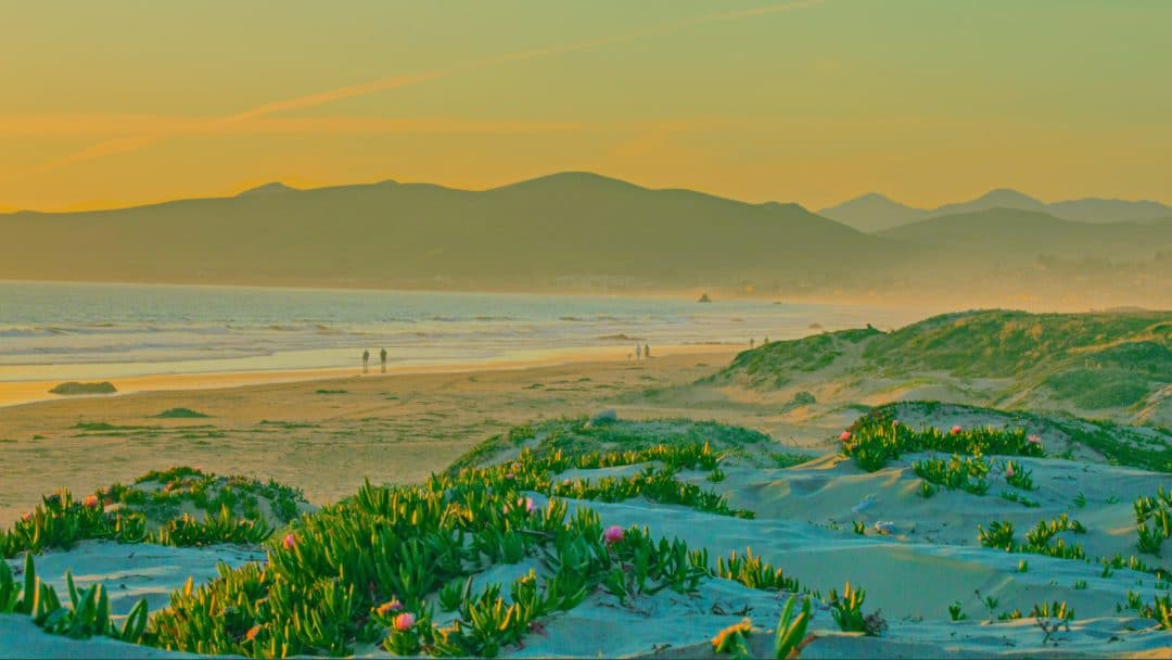 a golden sunset over beach dunes in los angeles