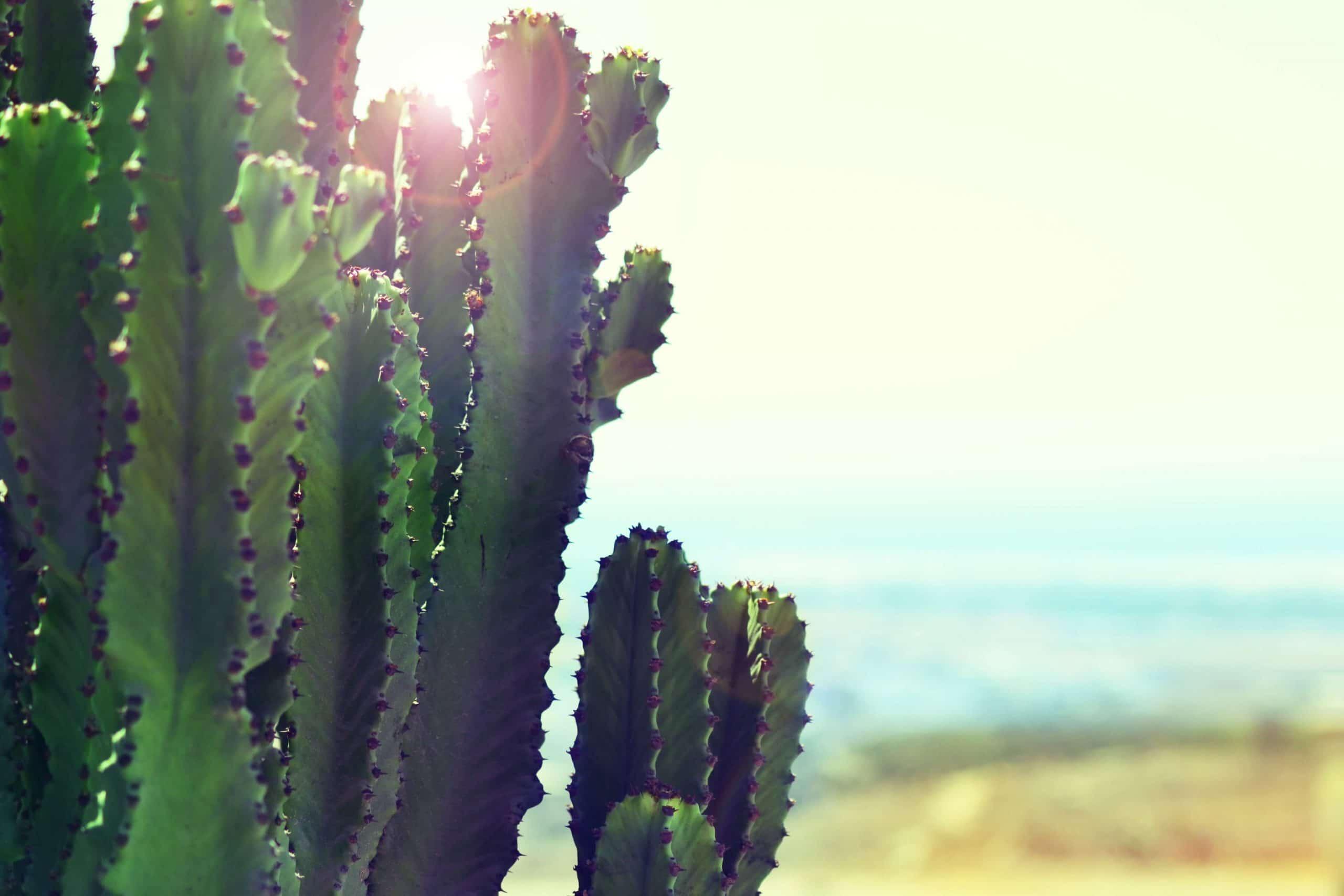 Adventures – Baja Surf Trip